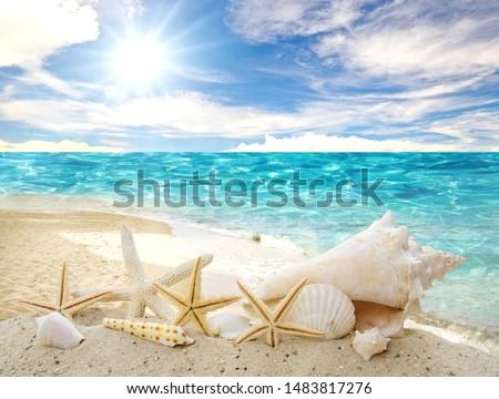 Holidays in the wonderful Caribbean Samana beach, summer vacation, background with starfish,  sea shells, beach and sunny sky,  tropical symbol Royalty-Free Stock Photo #1483817276