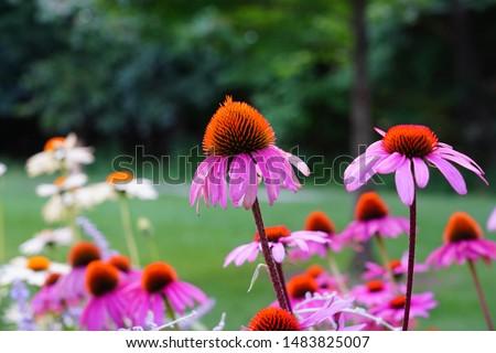 Beautiful Flower Garden blooming in the Summer #1483825007