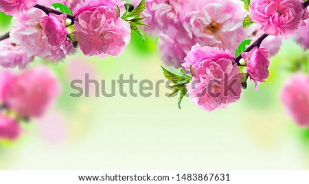 Amazing beautiful pink roses in garden are blooming, This is a great nature type used graphic design blooming flowers for advertisement, Close-up of wedding beauty pink roses.