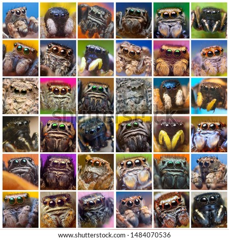 Photo collage of a set photographs of jumping spiders in square frames on the image #1484070536