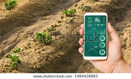 A man with a smartphone analyzes state young sprouts of potatoes. Planting potato plantations. protection from pests. Agribusiness, farming, Data collection analysis. Innovation agricultural industry #1484428883