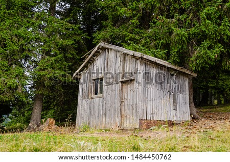 Old and creepy wooden shack hidden in the woods  #1484450762