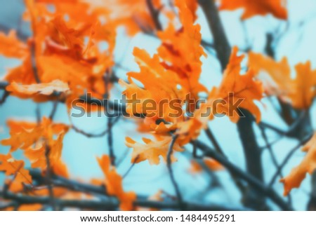 Blurred autumn background - orange oak leaves against the blue sky. Soft selective focus, blurred filter. #1484495291