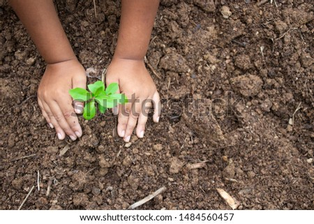 Planting trees, planting hands, planting trees, planting soil, saving earth and reducing global warming. #1484560457