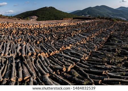 Deforestation in Kaz Mountains. Cutting thousands of trees for the gold mine. Forest destruction in Kirazli - Kaz Daglari, Canakkale / Turkey. Royalty-Free Stock Photo #1484832539