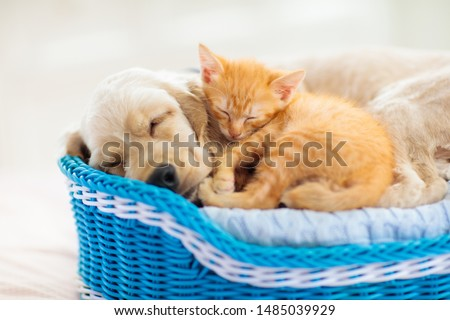 Cat and dog sleeping together in a basket. Kitten and puppy taking nap. Home pets. Animal care. Love and friendship.  #1485039929