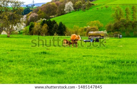 Cow with calf on pasture. Cow and calf on farmland. Cow with calf view #1485147845