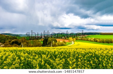 Summer agriculture farm field landscape. Meadow flowers in farmland scene. Agriculture meadow flowers view. Agriculture farmland meadow flowers landscape #1485147857