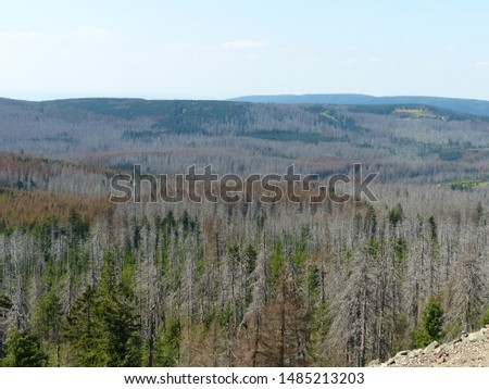 Catastrophic forest dying in the Harz mountains, Germany.  Probability: climate change, great dryness, and ultimately the bark beetle has the trees the coup de grace. Picture taken on August 22, 2019.