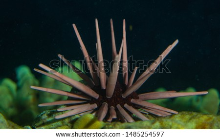 Marine invertebrates at night on coral reef #1485254597