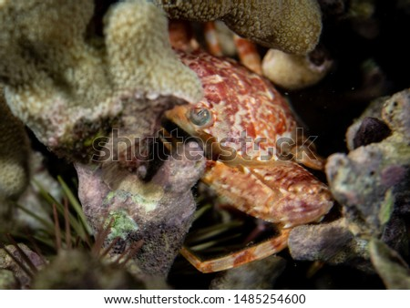 Marine invertebrates at night on coral reef #1485254600