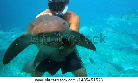 Swimming with tiger sharks in Caribbean Hol Chan Marine Reserve, Belize Royalty-Free Stock Photo #1485451523