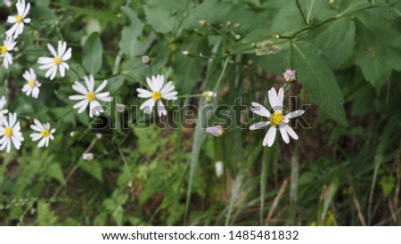 wild flowers blooming in the park #1485481832