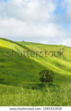 Santa Monica Mountains - Summer #1485631838