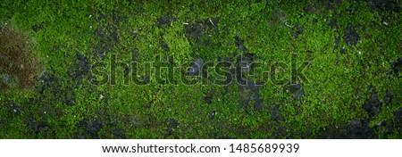 Moss green texture. Moss background. Green moss on grunge texture, background. Long web banner #1485689939