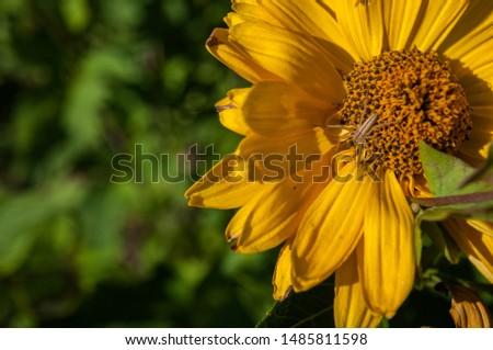 flower spider in the garden #1485811598