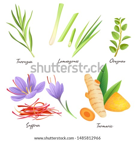Set of culinary herbs and spices isolated on white. Tarragon, lemongrass, oregano, saffron, turmeric (curcuma) #1485812966