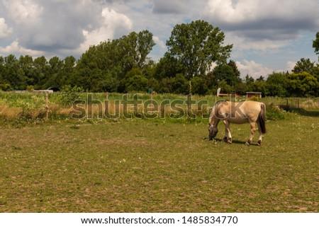 Two beige horses in farm paddock #1485834770