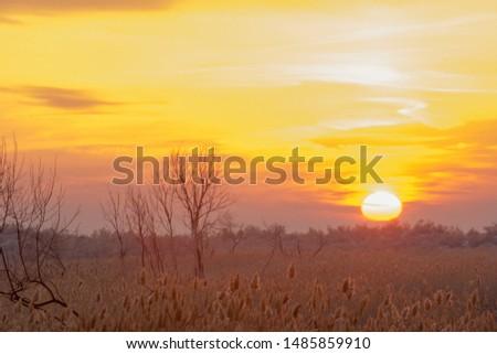 Sunset in the desert in the winter, the river Ili Kazakhstan. Kapchagai Bakanas #1485859910