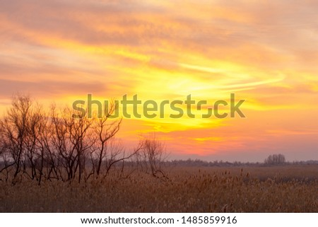 Sunset in the desert in the winter, the river Ili Kazakhstan. Kapchagai Bakanas #1485859916