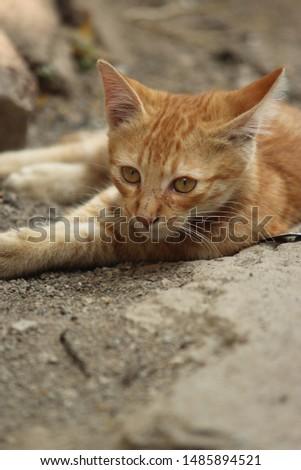 Lovely Cat Kitty Cute Kitty  #1485894521