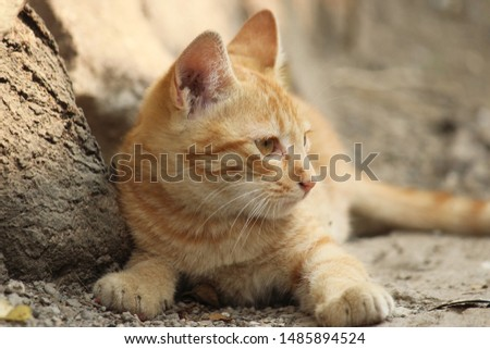 Lovely Cat Kitty Cute Kitty  #1485894524