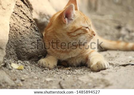 Lovely Cat Kitty Cute Kitty  #1485894527
