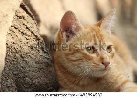 Lovely Cat Kitty Cute Kitty  #1485894530