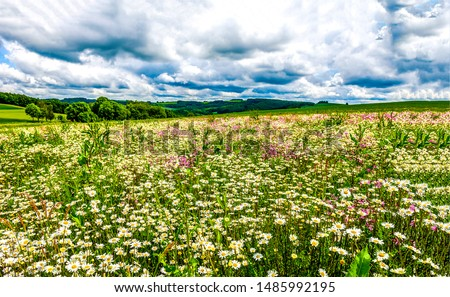 Summer meadow flower landscape.  Medow field grass and daisy flower at summer clouds sky. Royalty-Free Stock Photo #1485992195