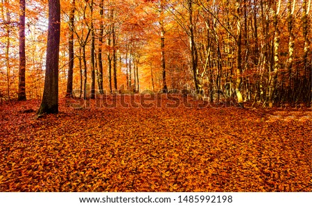 Autumn forest road leaves view. Autumn leaves ground. Autumn forest road landscape. Autumn leaves road view
