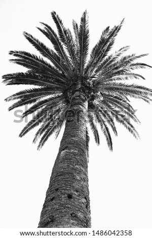 A close-up on a palm tree on a summer day. The photo is made in black and white to favor the contrasts of the palm tree. The main colors are the blacks and whites.