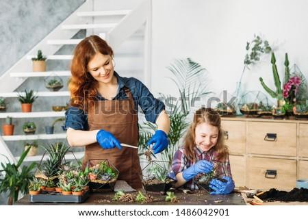 DIY florarium. Home gardening. Mother and daughter enjoying planting succulents, having fun, smiling. Royalty-Free Stock Photo #1486042901