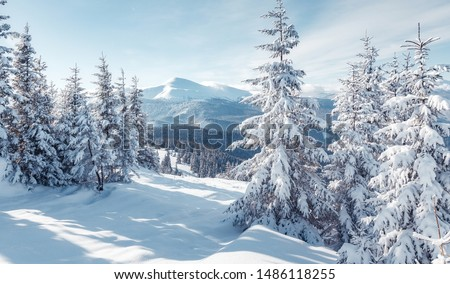 Splendid Alpine scenery in winter. Fantastic frosty morning in forest. snow-cowered pine trees under warm sunlight. Fantastic mountain highland. Amazing winter background. Wonderful Christmas Scene #1486118255