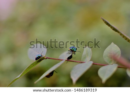 An image of young lady bugs on leave #1486189319