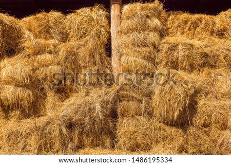 Dry baled hay bales stack, rural countryside straw background. Hay bales straw storage shed full of bales hay on agricultural farm. Rural land cowshed farm with hay straw bales stack under old shed #1486195334