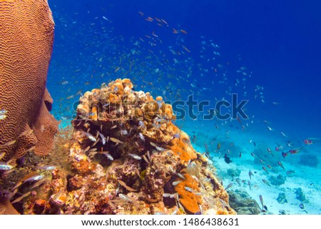 Coral reefs, schools of fish. One of the most famous and beautiful world places for diving and snorkel. Underwater world of Surin and Similan Islands. Andaman Sea on the border of Thailand and Myanmar #1486438631