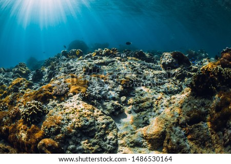 Underwater scene with corals and sea snake. Tropical blue sea #1486530164