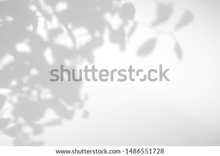 Gray shadow of the willow tree leaves on a white wall. Abstract neutral nature concept blurred background. Space for text. Overlay effect for photo. #1486551728