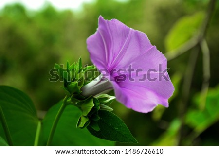 Good Morning Flowers Quotes Wishes
