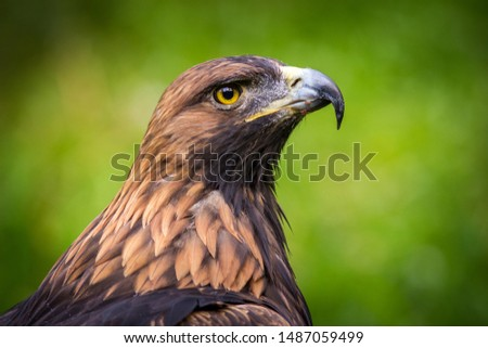 eagle rock portrait from nature