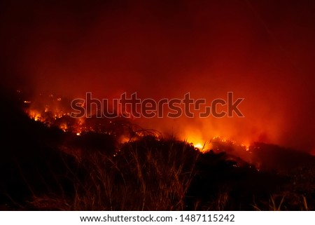 Amazon forest fire disater problem.Fire burns trees in the mountain at night. #1487115242