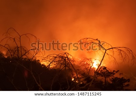 Amazon forest fire disater problem.Fire burns trees in the mountain at night. #1487115245