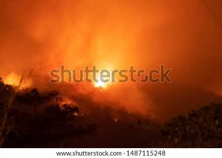 Amazon forest fire disater problem.Fire burns trees in the mountain at night. #1487115248