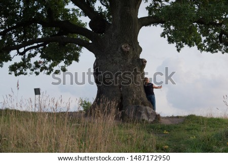 Tree against the sky. English oak, or summer oak, or ordinary oak, or English oak. A large, highly branched tree, with a huge crown and a powerful trunk. Reaches a height of 20-40 m.  #1487172950