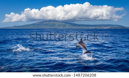 Dolphin jumping out of the water, island of Faial (Azores) in the background. Royalty-Free Stock Photo #1487206208
