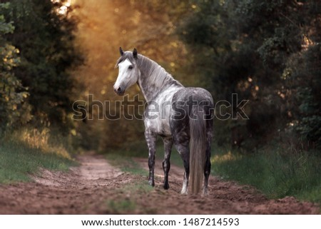 Beautiful horse in the magic forest. Purebred arabian stallion posing in the back light.