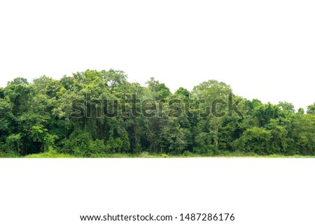 View of a High definition Treeline isolated on a white background #1487286176