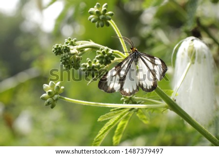 black and white butterflies perched on wild flowers. #1487379497