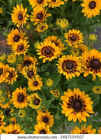 Bright Yellow Sunflower Like Summer Flowers  #1487559107