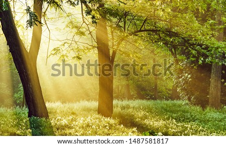 Sunrise sunrays filter through the trees in the forest and shed a soft light on the grass, transmitting a sense of peacefulness and hope for a new beautiful day and a bright healthy future to come